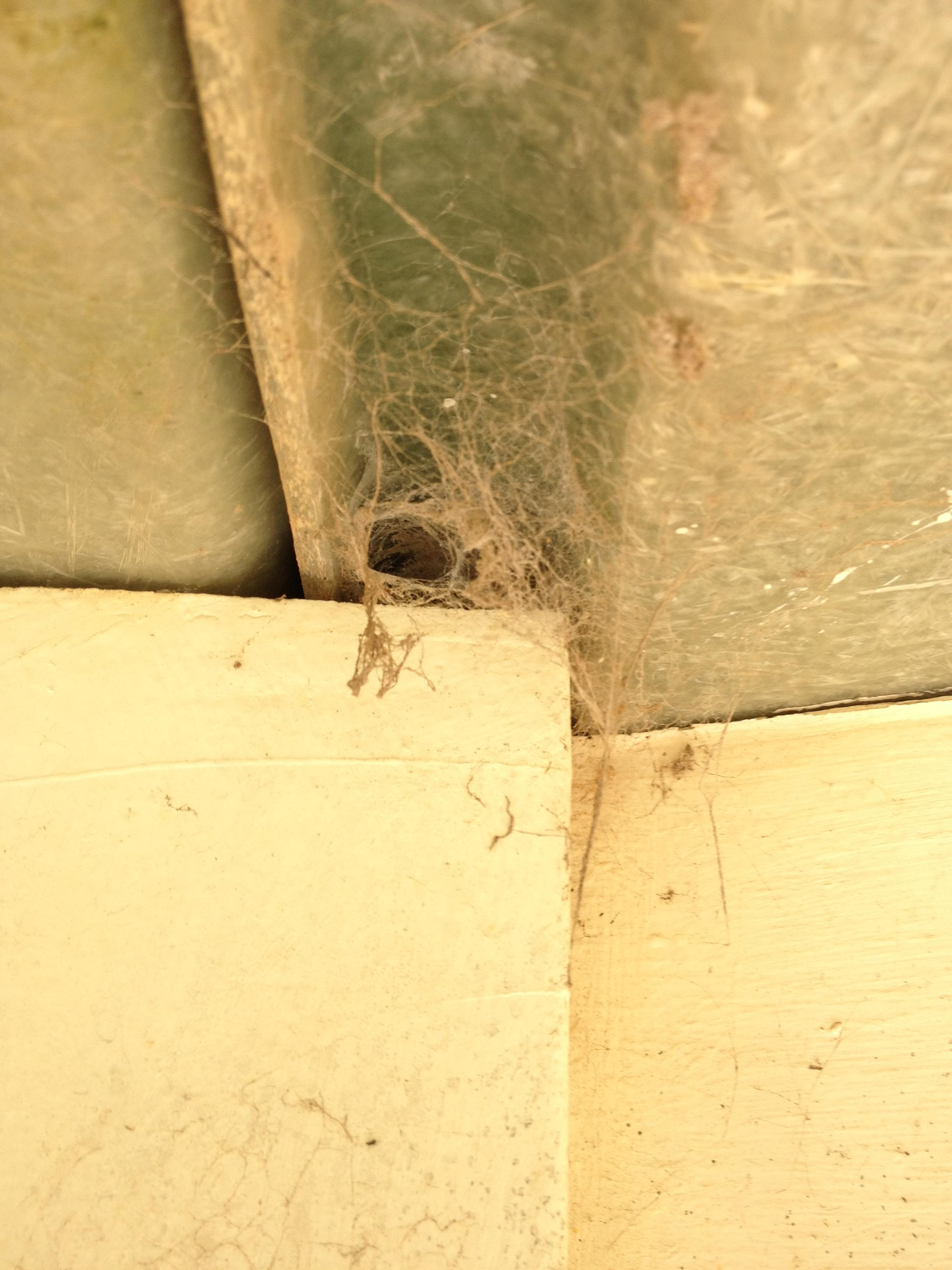Spider Treatments from After Hours Pest Control Melbourne