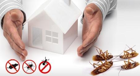 Pest-control-services-7
