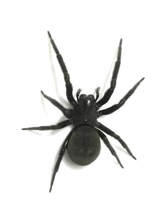 blackhousespider