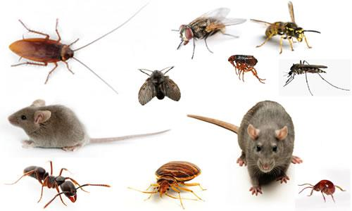 photo of pests